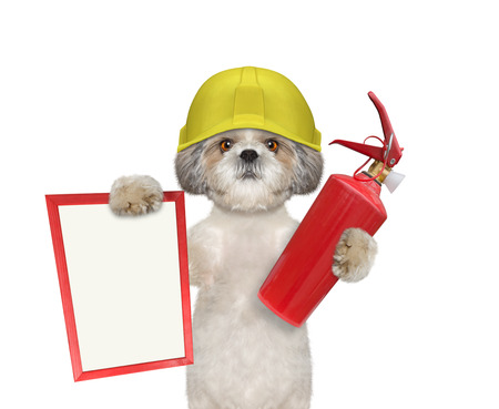 Cute firefighter dog is ready to work -- isolated on white