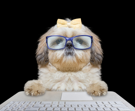 Cute dog in glasses working on the computer -- isolated on black
