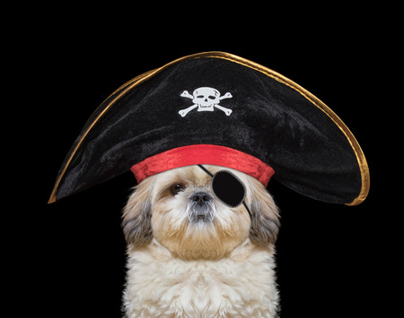 cute dog in a pirate costume -- isolated on black