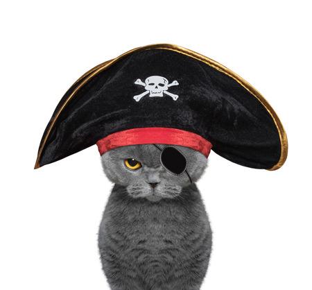 nette Katze in einem Piratenkostüm - isoliert auf weiß