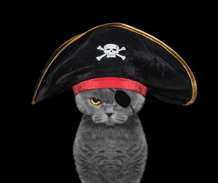 cute cat in a pirate costume -- isolated on black Stock Photo
