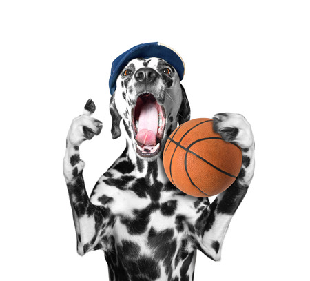 outcry: Cute dog in cap holding a ball and shout and scream -- isolated on white