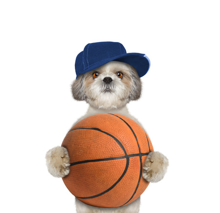 Cute little dog in cap holding a ball -- isolated on white Stock Photo