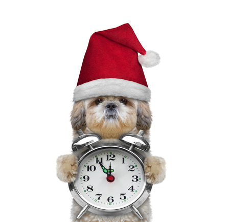 Cute dog in a hat of Santa Claus and clock -- isolated on white