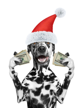 Santa dog holds in its paws a lot of money -- isolated on white