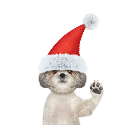 Cute santa dog is greeting you -- isolated on white Stock Photo