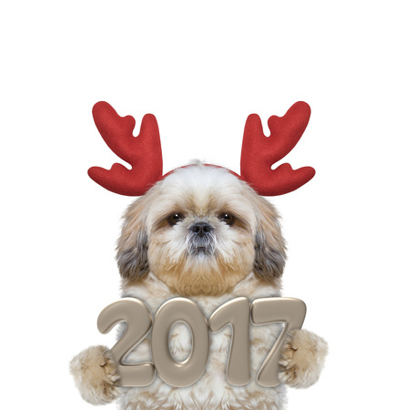 next year: Cute santa dog in reindeer antlers with 2017 new year numbers -- isolated on white Stock Photo