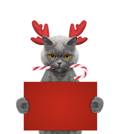 Cute cat in reindeer antlers holding a card with space for text -- isolated on white Stock Photo