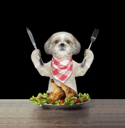 Cute dog is going to eat chicken -- isolated on black
