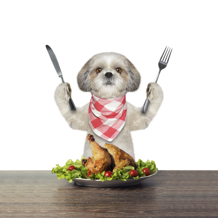 Cute dog is going to eat chicken -- isolated on white