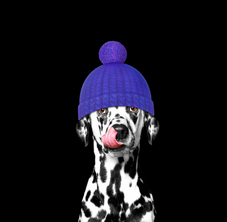 winter dog in a wool hat Stock Photo