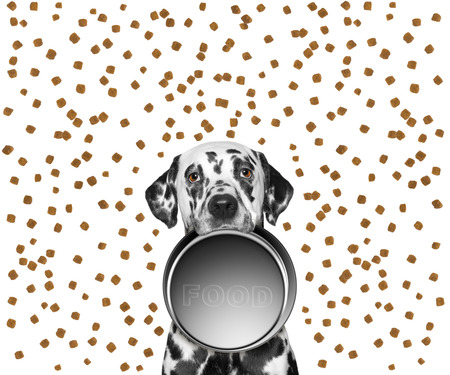portrait of a cute dalmatian and his food bowl