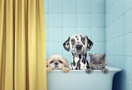 2 마리의 개와 고양이는 목욕탕에있다.