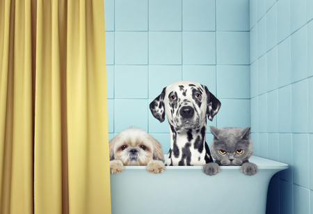 two dogs and cat in the bath 免版税图像