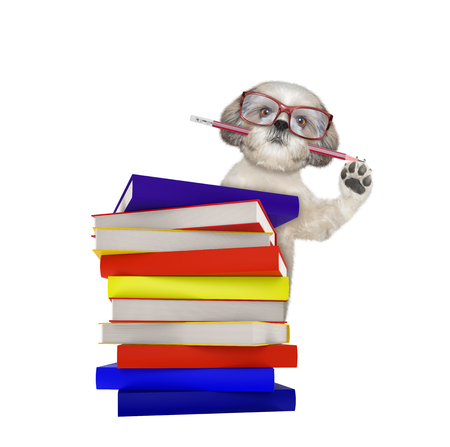 Cute intelligent dog with books isolated on white