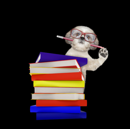Cute intelligent dog with books isolated on black