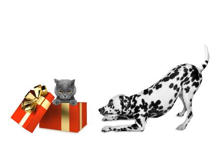 Wonderful Dalmation Chubby Adorable Dog - 84501218-cute-dalmatian-dog-standing-near-his-birthday-gift-box-with-cat  Photograph_255259  .jpg?ver\u003d6