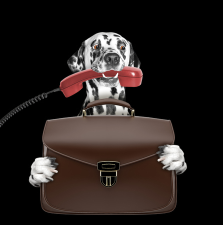 cute office worker businessman dog with suitcase or bag isolated on black Stock Photo