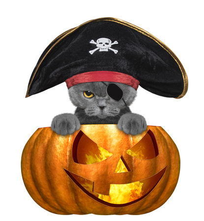 halloween pumpkin with cute cat in pirate costume - isolated on white