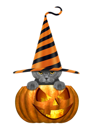 cute cat in funny hat sitting in halloween pumpkin - isolated on white