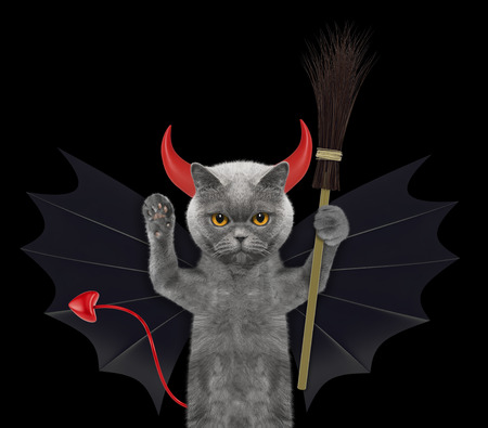 cute halloween cat in bat devil costume with broom - isolated on black