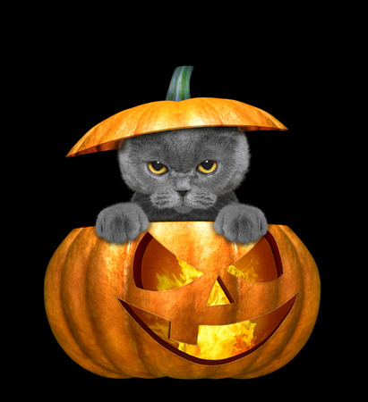 halloween pumpkin with cute cat - isolated on black Фото со стока