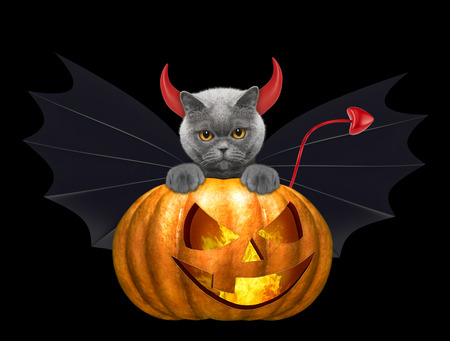 halloween pumpkin with cute cat in bat costume - isolated on black