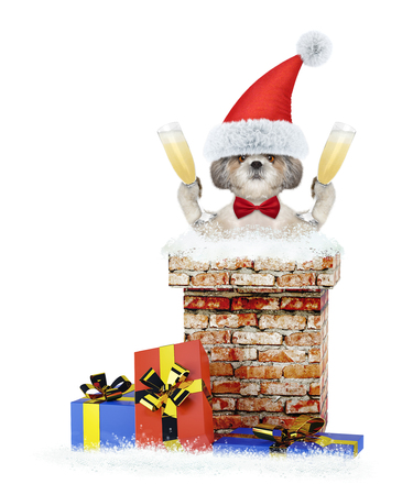 Shitzu dog with glass of champagne climbs out of chimney. Isolated on white Stock Photo