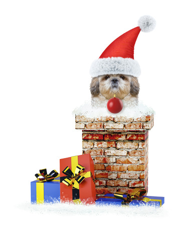 Shitzu santa dog with christmas ball climbs out of chimney. Isolated on white
