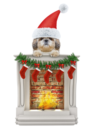 Cute shitzu santa dog near the fireplace. Isolated on white Stock Photo