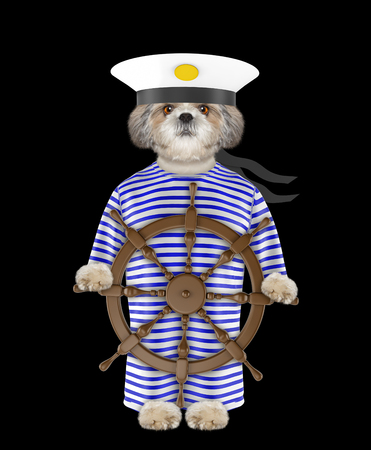 Shitzu dog dressed as a sailor. Isolated on black background