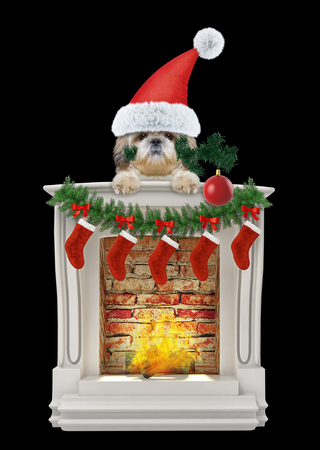 Shitzu dog with Christmas tree and ball near fireplace. Isolated on black Stock Photo