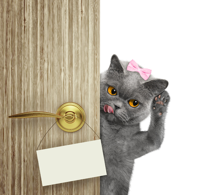 Happy cat peeks out from behind the door. Isolated on white