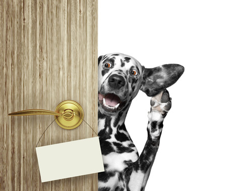 Cute dalmatian peeks out from behind the door. Isolated on white Stock Photo
