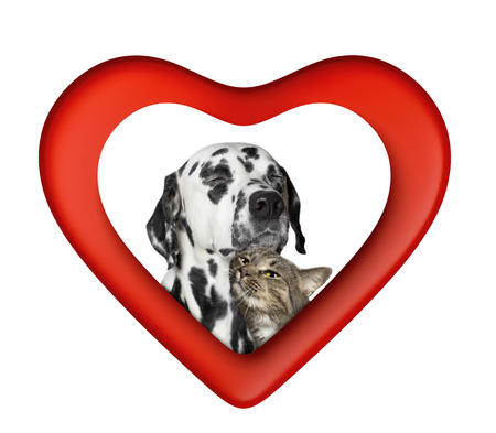 Cute valentine cat and dog in red heart isolated on white Standard-Bild