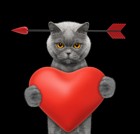 Cute cat is falling in love on valentines day. Isolated on black Stock Photo