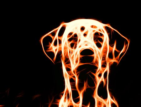 Abstract fire dog on black background