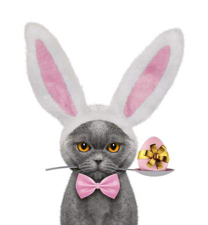 Pretty cat with rabbit ears and easter egg. Isolated on white