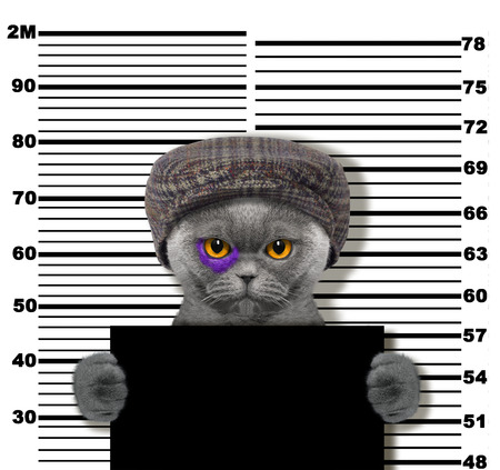 Criminal cat at the police station. Photo on white background
