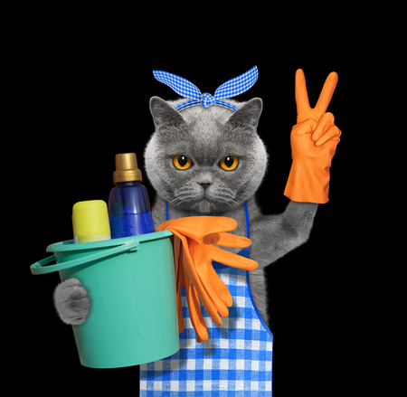 Cat in apron doing household chores. Isolated on black Stock Photo