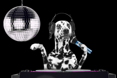 Dalmatian dog singing with microphone a karaoke song in a night club -- isolated on black Imagens