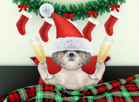 Decorated for new year living room with little dog wearing santa costume Stock Photo