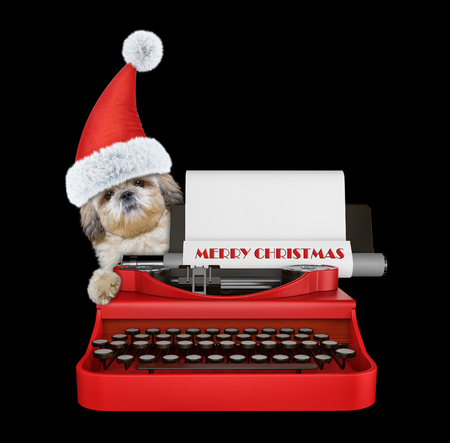 Cute santa shitzu dog is typing on a typewriter keyboard. Isolated on black