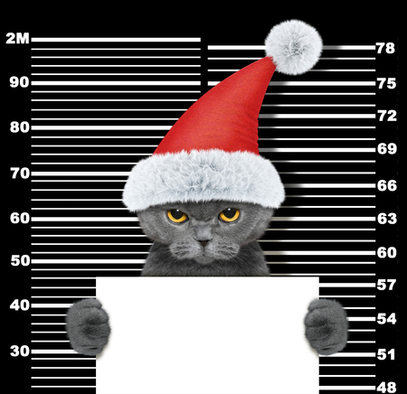 Cute cat as santa claus in prison. Isolated on black Standard-Bild
