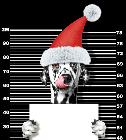 Dalmatian dog as santa claus in prison. Isolated on black