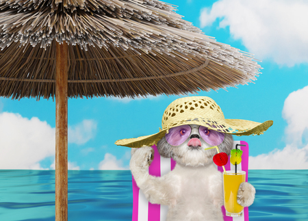 Cute shitzu dog resting and relaxing on the beach chair under umbrella with juice at the beach ocean shore, on summer vacation holidays. 3d render