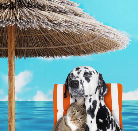 Cute dalmatian dog and cat resting and relaxing on the beach chair under umbrella. 3d render Stock Photo