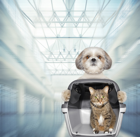 Cute dog and cat wait at the airport with blue suitcase Banco de Imagens