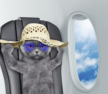 Cute cat in hat on board of airplain Banco de Imagens