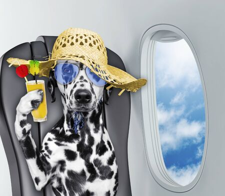 Cute dalmatian dog on board of airplain with juice
